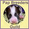 Papillon Breeders